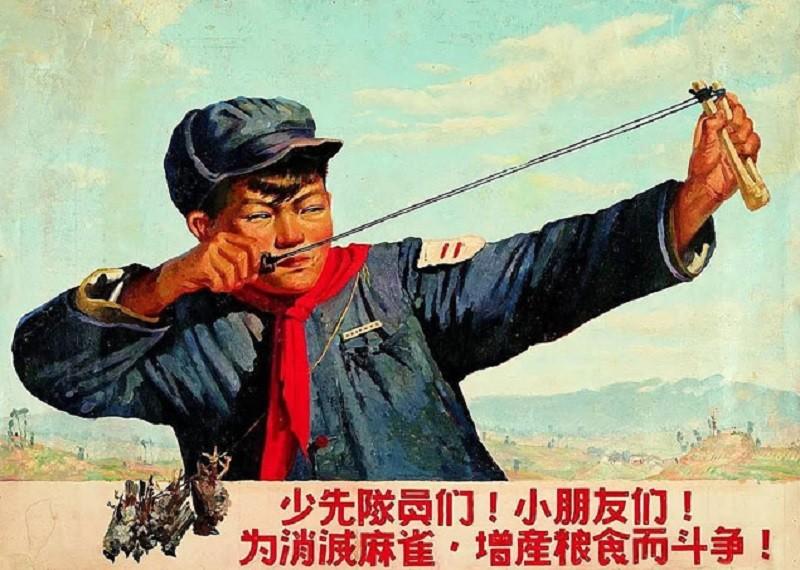 Как в Китае массово уничтожали воробьёв и к чему это привело