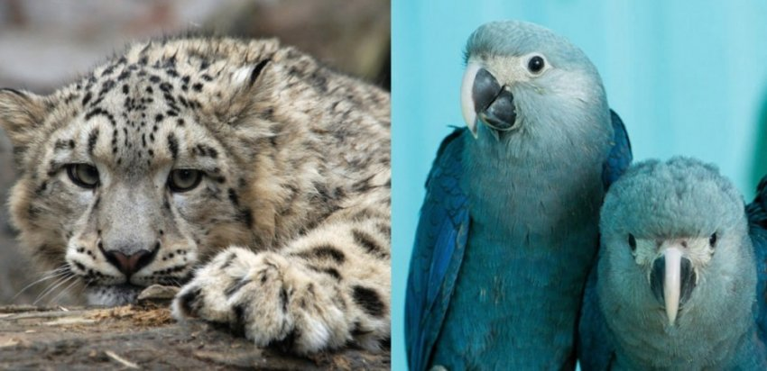 Животные, которых мы можем больше никогда не увидеть