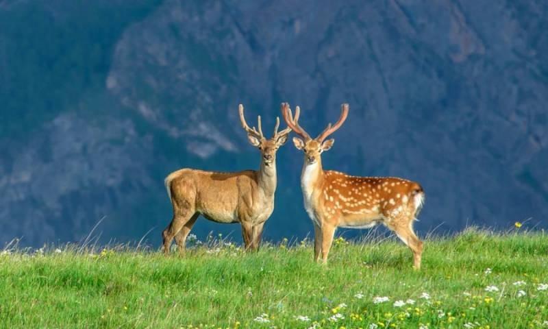День заповедников и национальных парков в России отмечают 11 января 2021 года