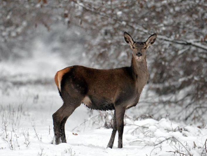 Обряды и приметы в День Емельяна Зимнего: что можно и нельзя делать 21 января 2021 года