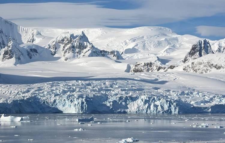В антарктическом шельфовом леднике были обнаружены неизвестные науке животные