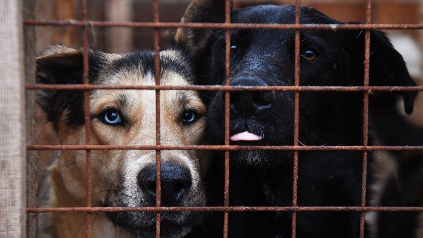 Может ли закон об эвтаназии решить проблему бездомных животных в России