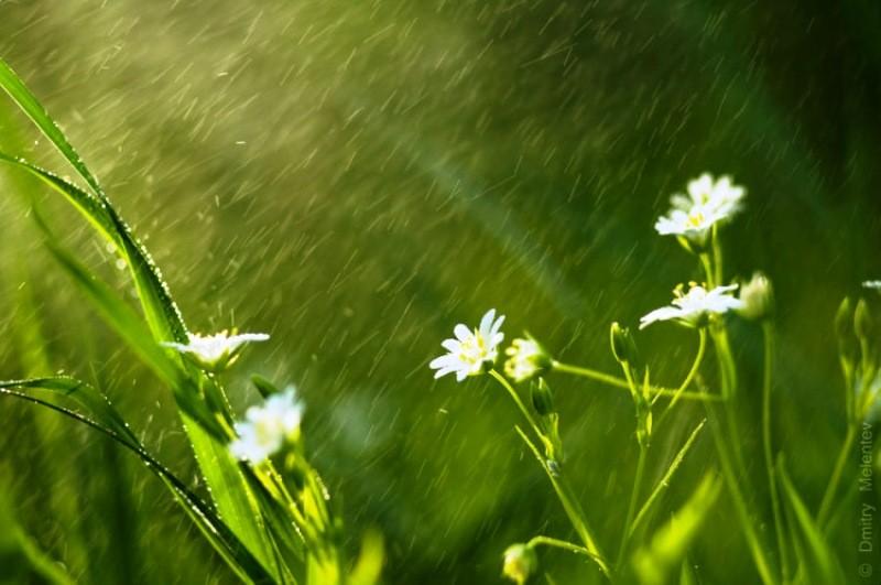 Народные приметы и праздники 24 мая 2021 года, в день Мокия Мокрого