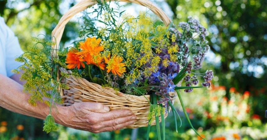 Какие травы можно собирать в мае и июне 2021 года для вкусного и ароматного чая