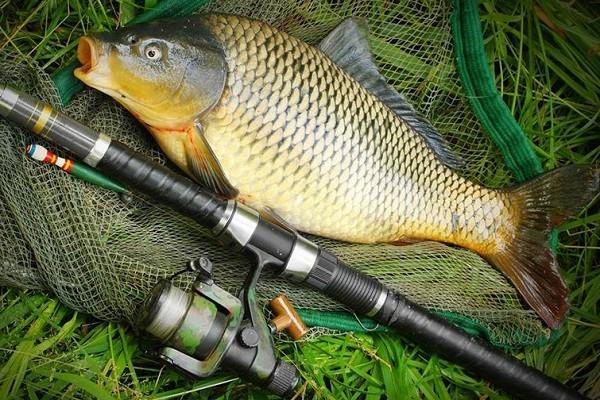 На Карпа Карполова рыбкой угощайся, да от сажи прочищайся: народные приметы и поверья на 8 июня 2021 года