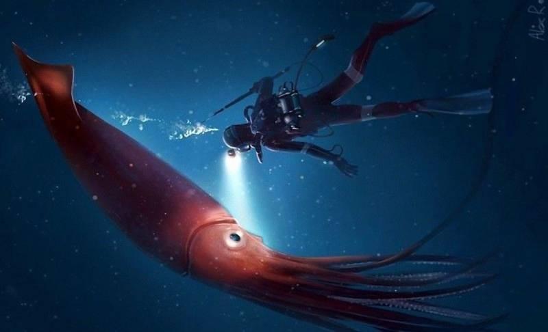Стало известно место обитания кальмаров больших размеров