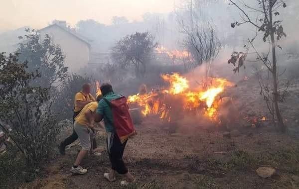 Появилась свежая информация о лесных пожарах в Турции