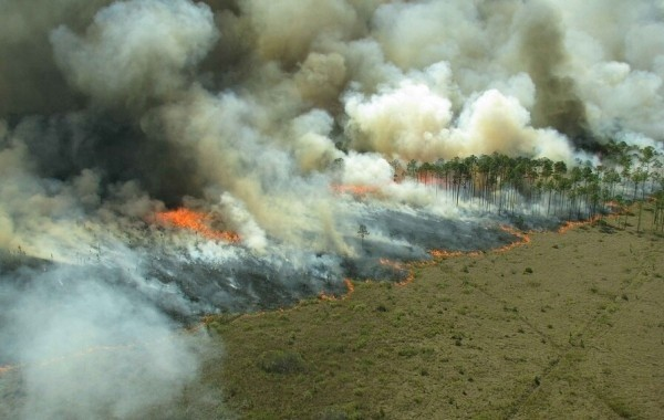 В Якутии от огня спасли уникальный питомник