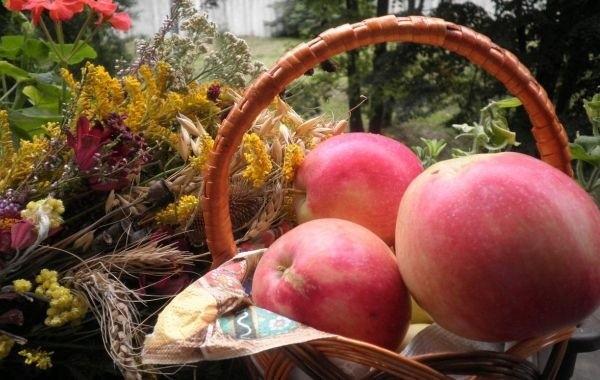 Верующим рассказали о запретах на Яблочный Спас
