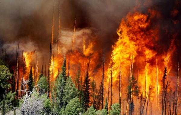 Почти 20 домов сгорели в Самарской области из-за лесного пожара