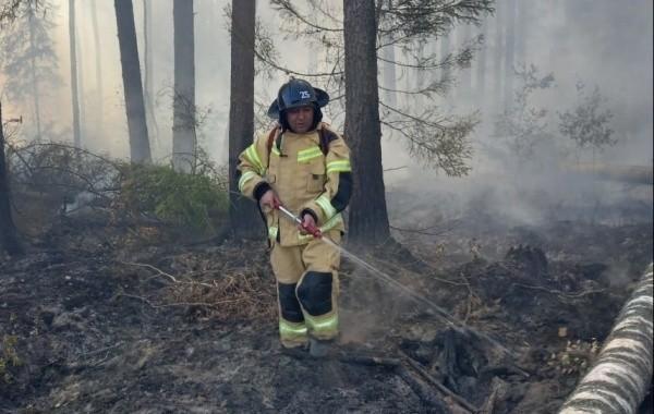 Крупный лесной пожар удалось ликвидировать в Марий Эл