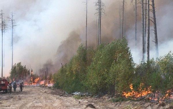 Спасатели и волонтеры продолжают тушить лесные пожары в Якутии