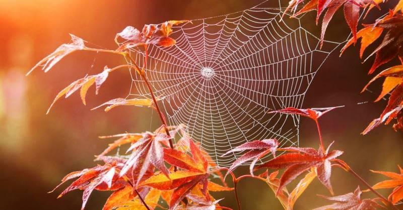 Неужели осень: будет ли бабье лето в октябре 2021 года