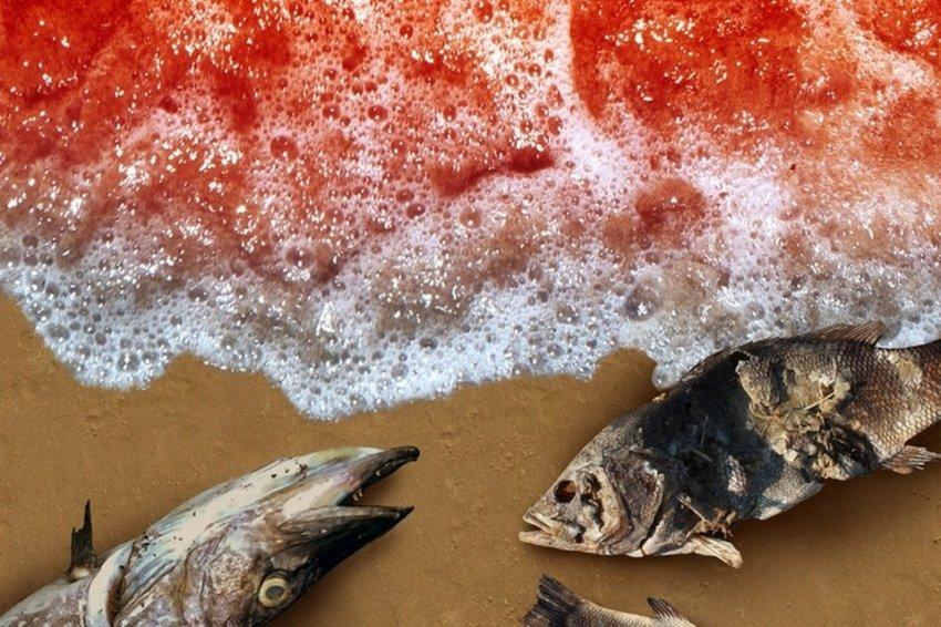 Грозит ли нам массовое вымирание?